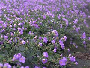DM Color Express » Bacopa BlueDM Color Express