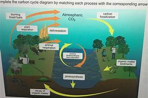 Solved  Complete The Carbon Cycle Diagram By Matching Each