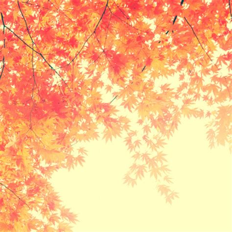 Artsy Fall Laptop Backgrounds by Photo Great As Background My Famiy