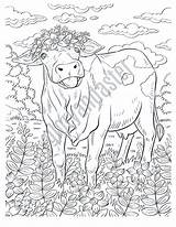 Coloring Cow Printable Adult sketch template