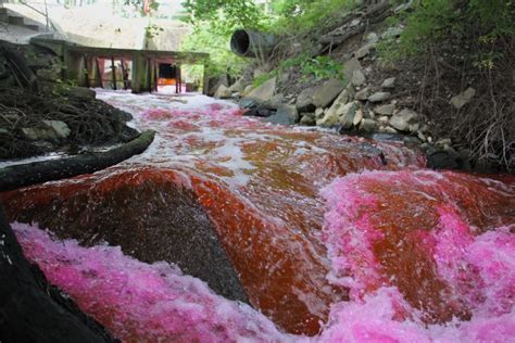 protecting delaware shellfish  dyeing streams red whyy