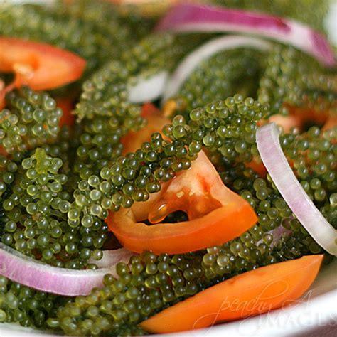A seaweed called Lato: Lato Salad   The Peach Kitchen