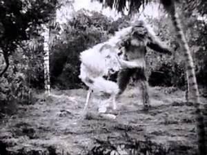 GORILLA VS LION FIGHT!!! (REAL) - YouTube
