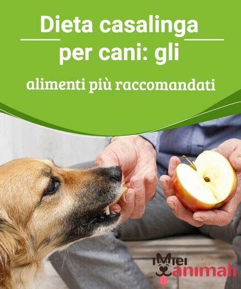 alimentazione per cani casalinga dieta casalinga per cani gli alimenti pi 249 raccomandati