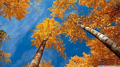 Fall Trees Autumn Season Widescreen Desktop Background
