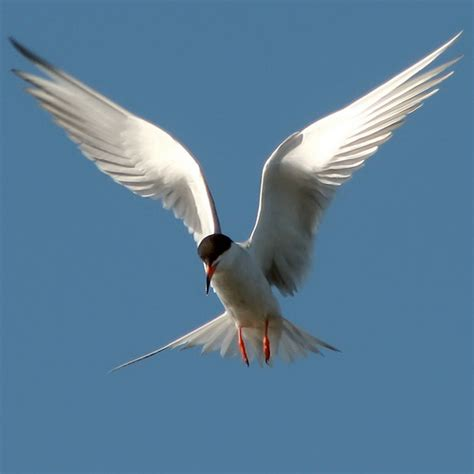 20 fantastic pictures of birds flying