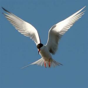 Why Birds Fly in V Formation | The Random Science