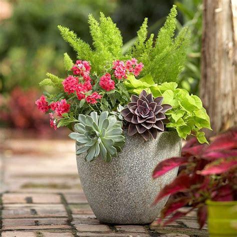 Gartenideen Im Herbst  Bringen Sie Ihre Topfpflanzen Nach