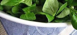 Feldsalat Setzlinge Pflanzen : vogerlsalat feldsalat valerianella locusta ~ Frokenaadalensverden.com Haus und Dekorationen