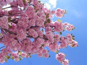 Images of Spring Flowering Trees and Flowers