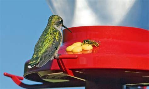 keeping bugs   hummingbird feeders backyard chirper