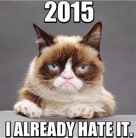 New Grumpy Cat Memes - 17 best images about grumpy cat on pinterest grumpy cat humor grumpy cat quotes and humor