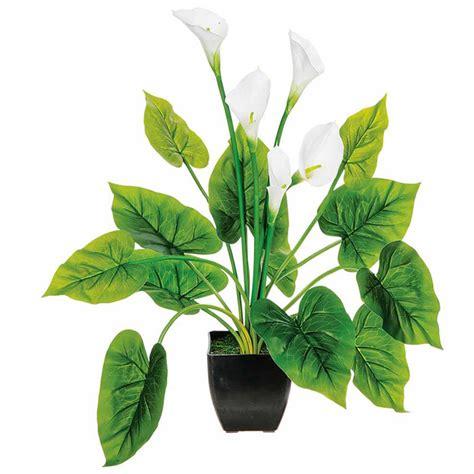 plante artificielle arum avec fleurs artificielles blanches