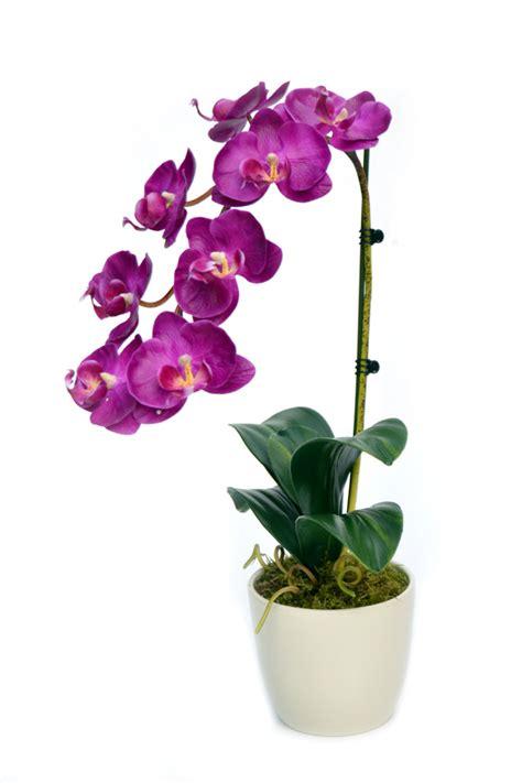 s occuper d une orchidee en pot 28 images comment entretenir orchid 233 e ou orchid 233 e