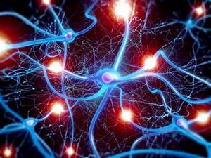 Diagram Of Neurons