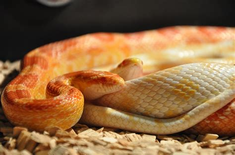 Cute Snakes That Are Adorable Enough To Be Your Pet ...