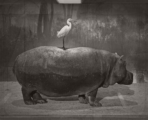 black and white jan gulfoss surreal black and white wildlife monovisions