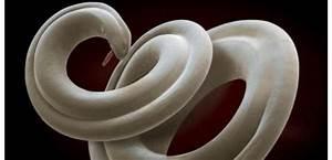 Mauvaise Odeur Synonyme : giardiasis giardia lamblia ~ Premium-room.com Idées de Décoration