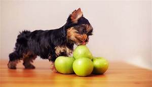 can dogs eat apples 8 potential benefits and 3 precautions