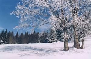 Winter Allergy Symptoms
