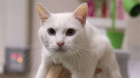 This item is a direct reference to the propeller cat pet/npc in dungeon defenders 2. El gato sordo Aquiles, nombrado pronosticador del Mundial ...