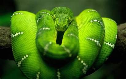 Snake Wallpapers 1080p Boa Anaconda Constrictor Cool