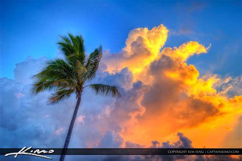 coconut tree  fort lauderdale beach park sunrise