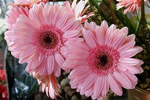 Pink Flowers | Young Gardener