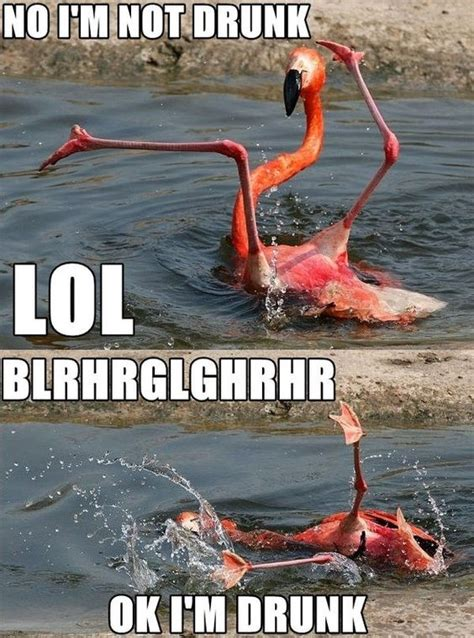 Drunk Memes - drunk pink flamingo funny pictures quotes memes jokes