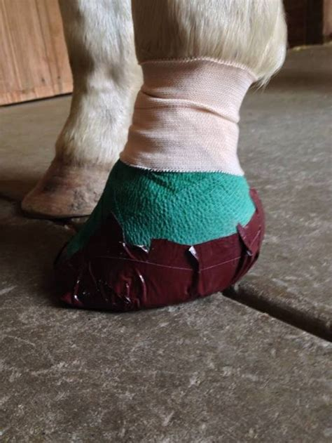 Diaper Bandage for Hoof - Mid-Rivers Equine Centre