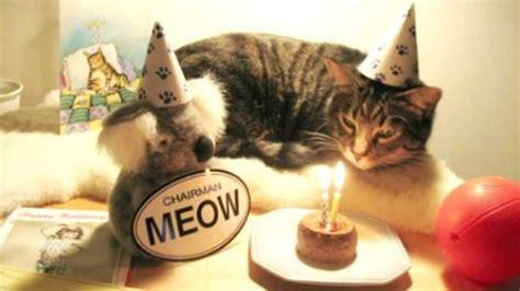 cute  funny   animals celebrating birthdays
