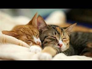 Sisalteppich Für Katzen : entspannungsmusik f r katzen entspannende musik f r katzen und k tzchen youtube ~ Orissabook.com Haus und Dekorationen