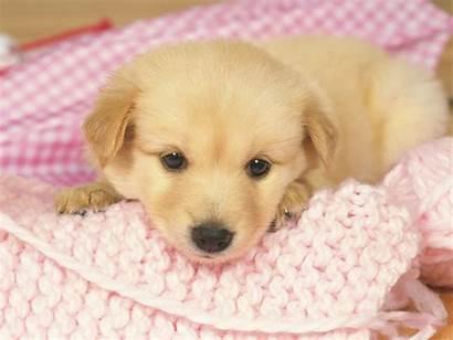 Puppy Wallpapers Pixelstalk