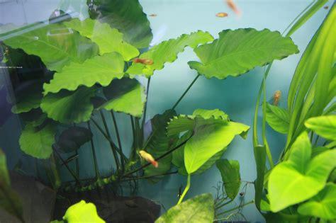 jenis tanaman aquascape ra restya aquascape