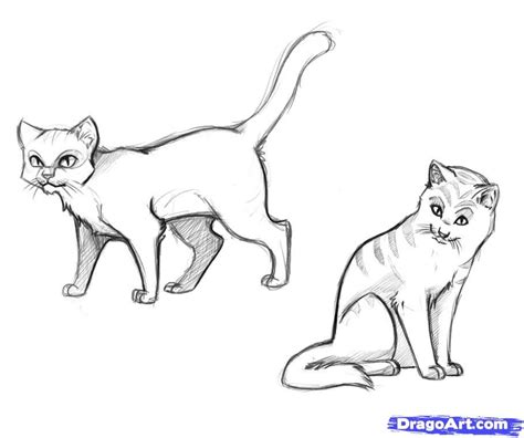 realistic cat drawings   draw warrior cats step