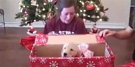 watch this definitive proof that puppies are the world s
