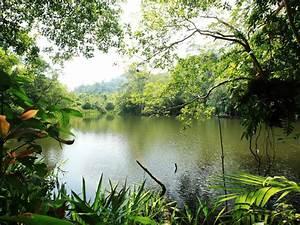 Trophic, Landscape, Jungle, River, Lake, Water, Rain, Forest, Lush