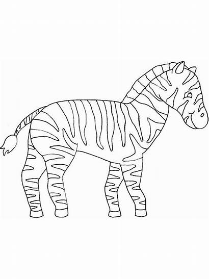 Zebra Coloring Pages Animals Printable