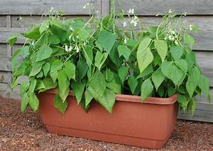 5 Trendy Vegetables to grow this year. | The Art of Doing ...