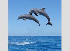 In 4 Jahren sollen wir mit Delfinen sprechen können WELT