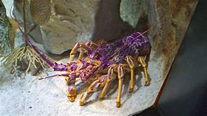 The Great Thoe Adventure: Sydney Aquarium
