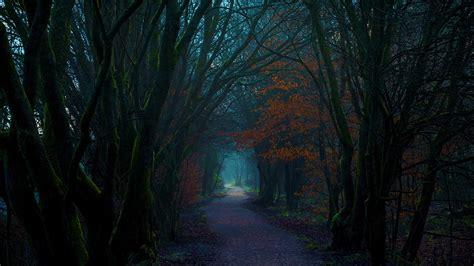 Dark Autumn Forest Path Hd Wallpaper