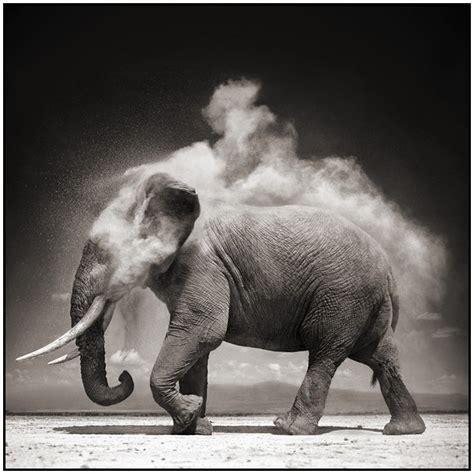 inspirational fine art wildlife photography