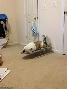 Ironing Dog