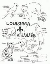 Coloring Pages Wildlife Louisiana Animals Swamp State Flag Printable Tree Map History Animal Crafts Sheets Printables Florida Preschool Lsu Habitats sketch template