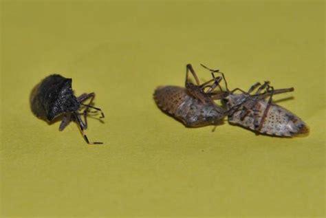 was kann gegen ameisen tun was kann gegen fliegen tun was tun gegen fliegen