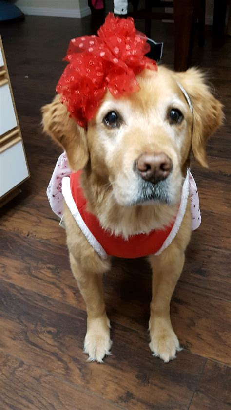 bailey senior dog category