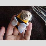 Robo Dwarf Hamster Cages | 570 x 428 jpeg 31kB