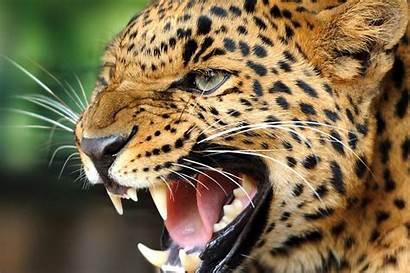 Wild Animals Animal Desktop Wallpapers Cool Android