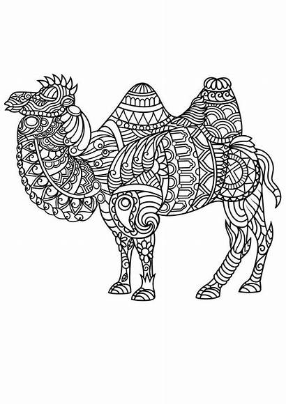 Coloring Mandala Animal Pages Camel Animals Adult
